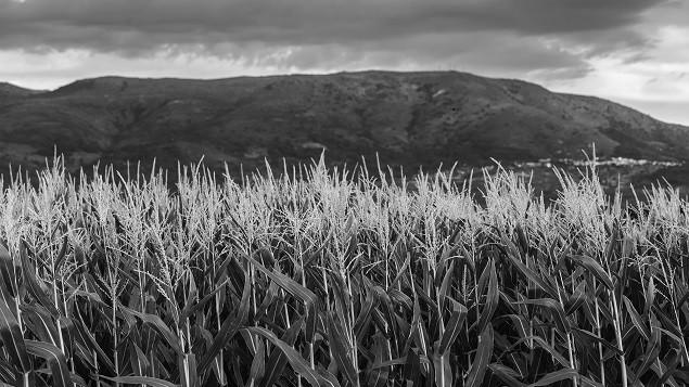 Bønder, forretningssystemer og innhøsting